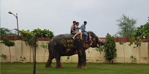 Elephant Riding Image
