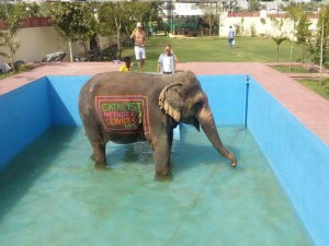 Elephant Enjoying
